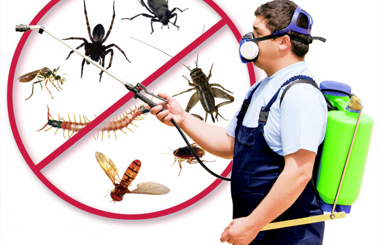 How to Manage Pests in Apartments?