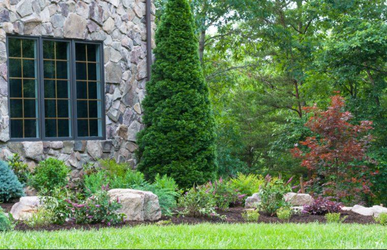 Summer season Gardening Suggestions