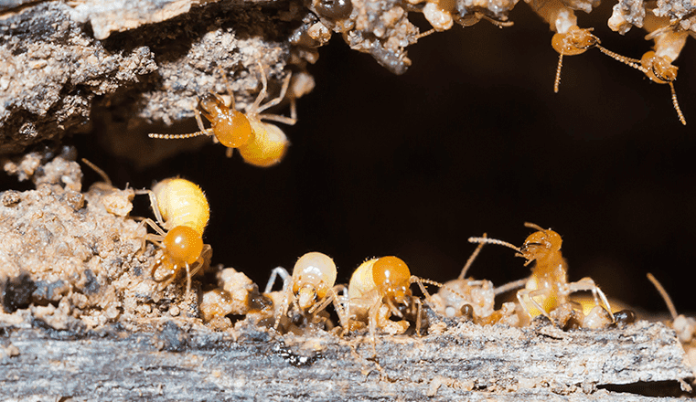 Protecting Your Home From Damaging Pests