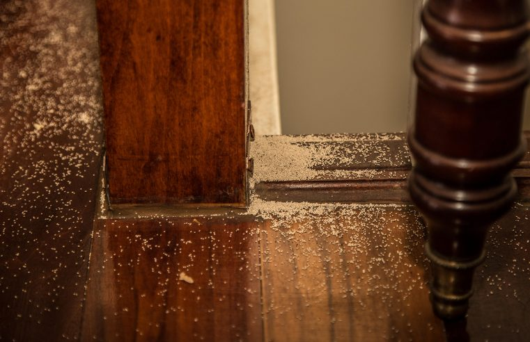 2 Ways To Deal With a Termite Infestation