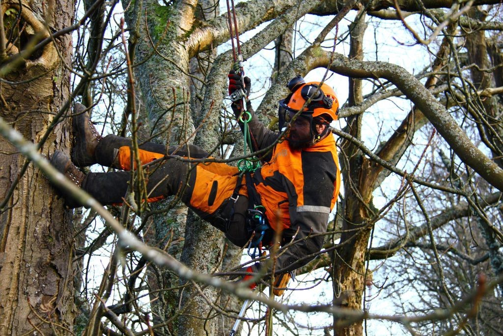 Reliable Outlet to Patronize for Tree Management