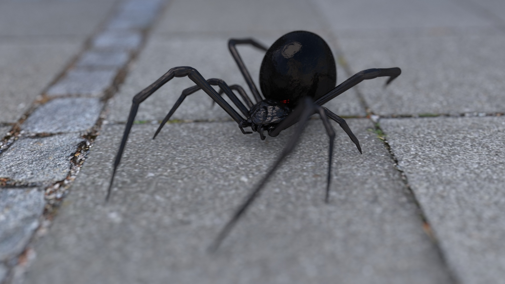 How to Treat a Spider Bite at Home and When to Seek Medical Help