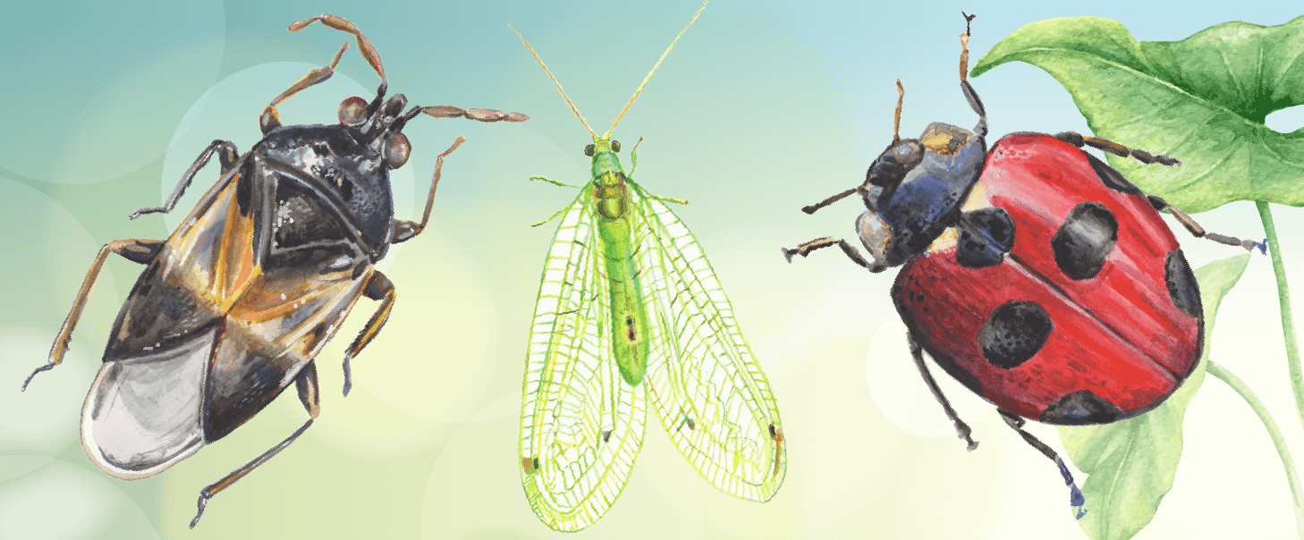 4 Common Insect Pests