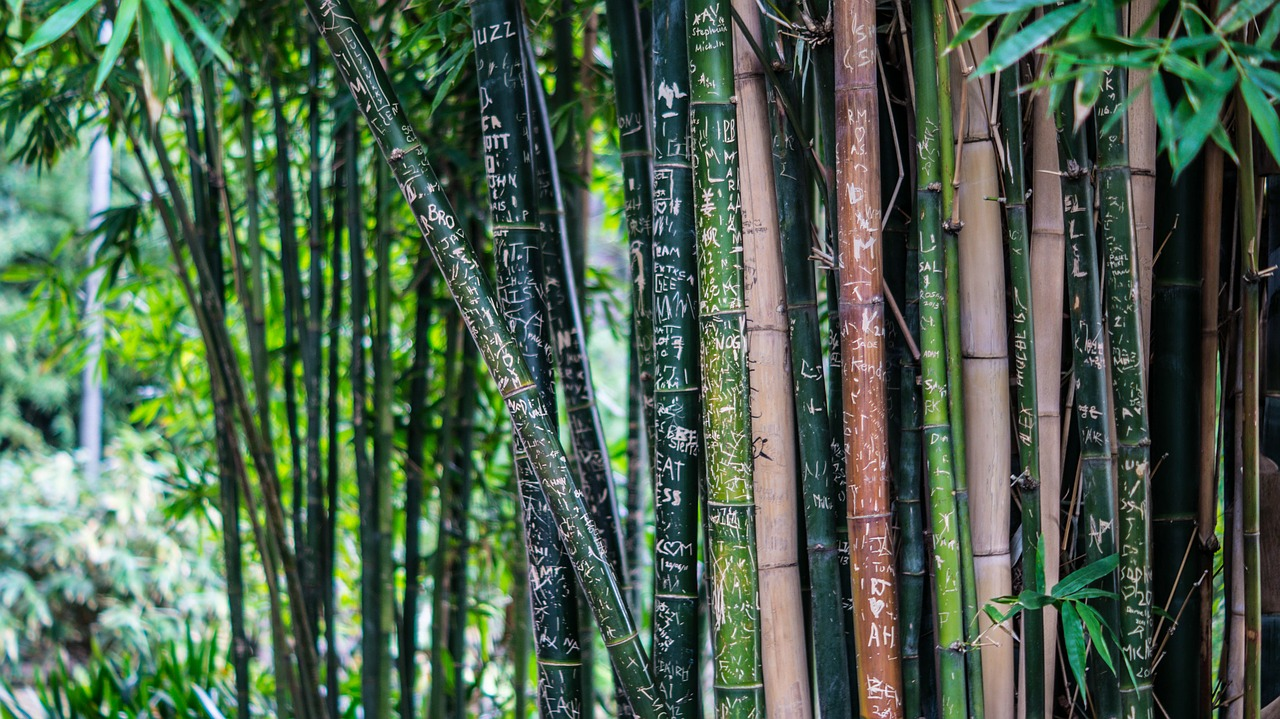 Bamboo Poles-Wonder of the new world
